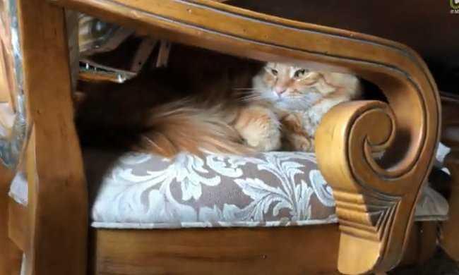 50b6b1719f16 Όταν ένας σκύλος δεν αφήνει σε ησυχία μια γάτα! - tromaktiko