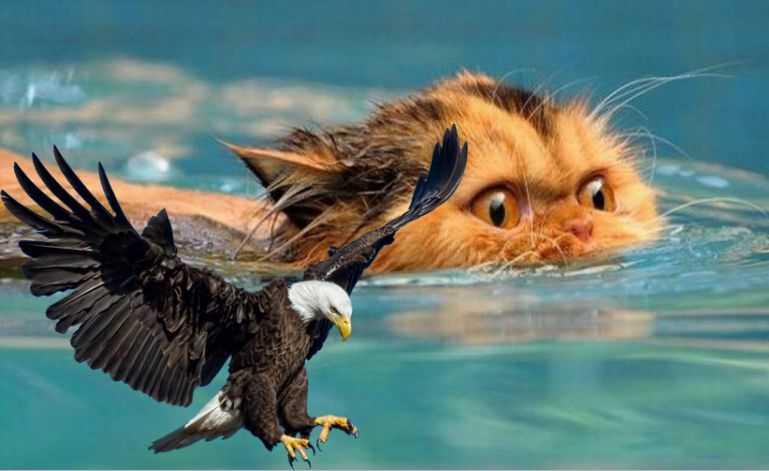 Μεγάλο πουλί ένα