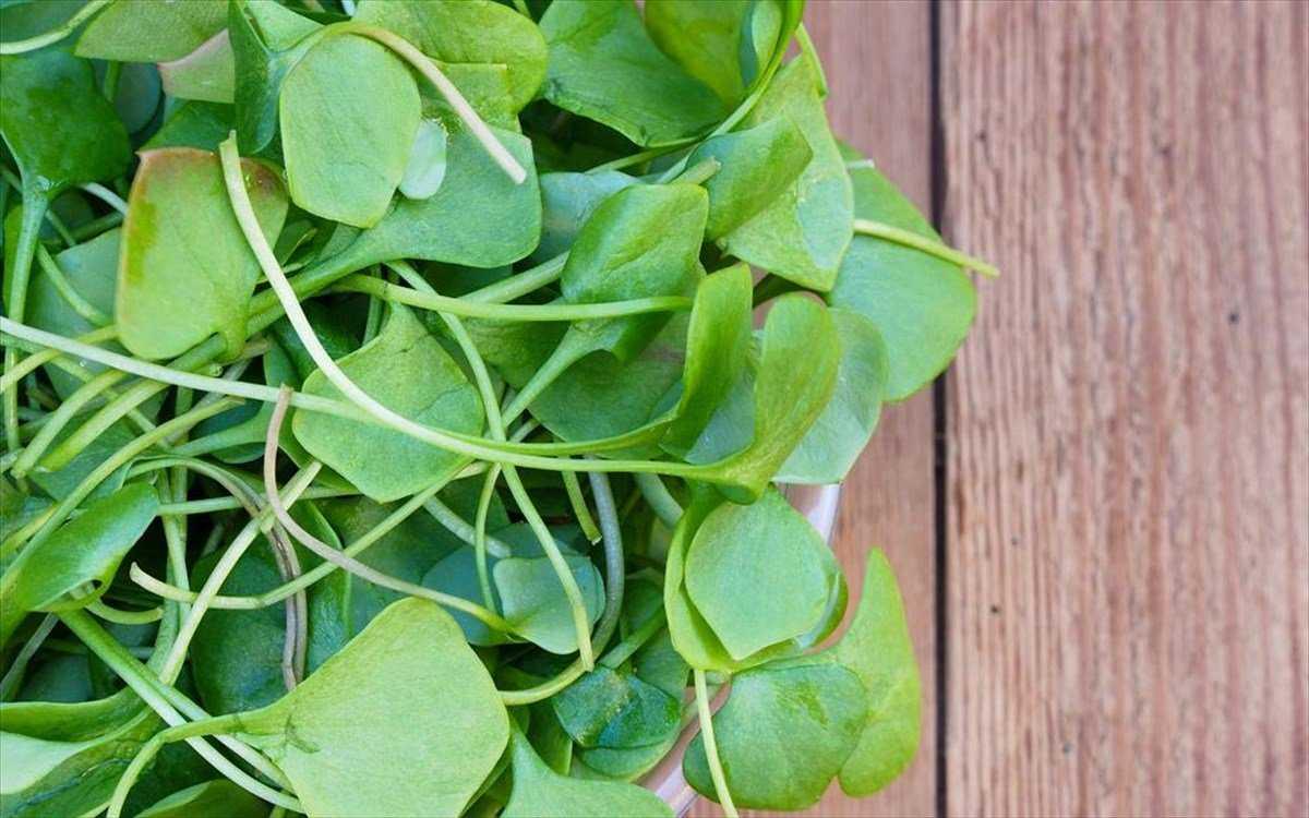 """Το """"θαυματουργό"""" λαχανικό που ρίχνει πίεση και χοληστερίνη και προστατεύει από τον καρκίνο 6"""
