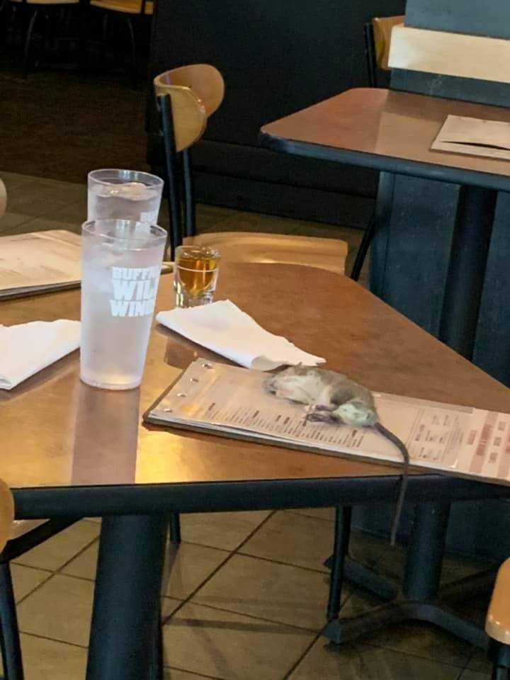 Εφιάλτης… αρουραίος προσγειώθηκε στο τραπέζι πελάτισσας σε εστιατόριο