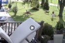 Συγκλονιστικό βίντεο: Κογιότ επιτίθεται σε κοριτσάκι που έπαιζε αμέριμνο στην αυλή.